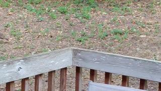 Backyard Turkey Gang