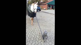 baby dog walking with horse
