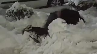 Dude lays out snowman during quarantine snowfall