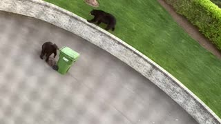 Bear Discovers Meals on Wheels