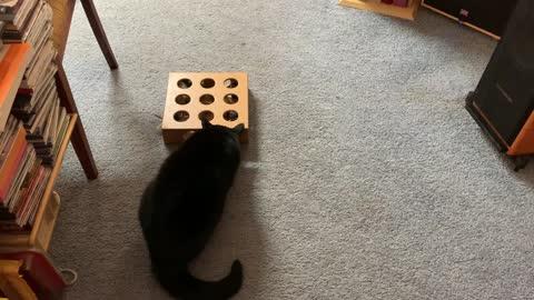 Kitty's Christmas treats