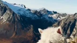 Dog enjoying amazing views in norway