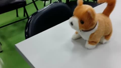 small cute puppy寵物狗