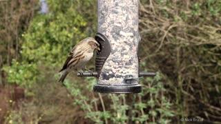 Birds feeding and singing