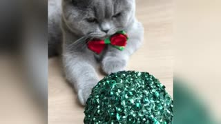 Grumby cat don't likes Christmas