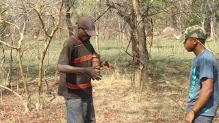 Huge Snake Caught After Chasing Man