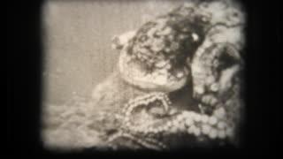 Moray Eel versus Octopus