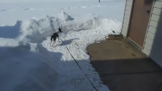 Puppy Snow Fence