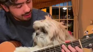 Man serenades his doggy with beautiful Spanish song