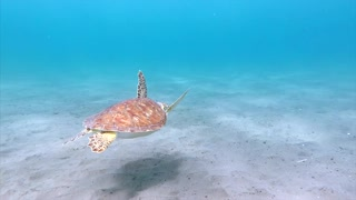 beautiful turtle I wild creature