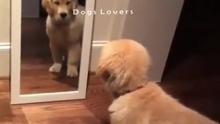 Dog watching The Mirror with astonishment