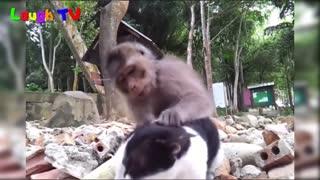 Funniest Monkey fondles cat