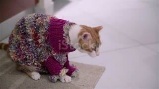 cute cat trying to take of this clothes
