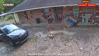 Animals Scaring delivery drivers