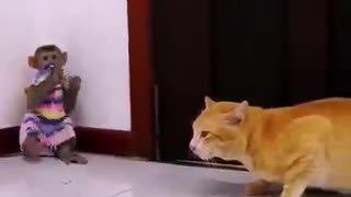 Monkey playing with cat 😸