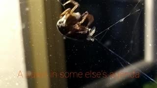 Spiders tyranny