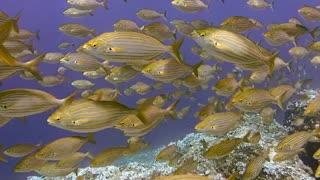 Diving Scuba Underwater Fish Ocean Sea