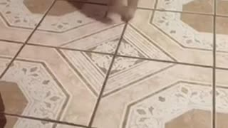 Cute small brown puppy smiles and runs away