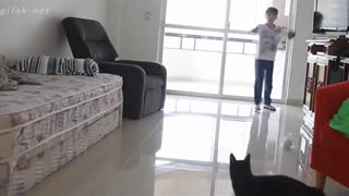 This Cat Should Have Been A Goal Keeper