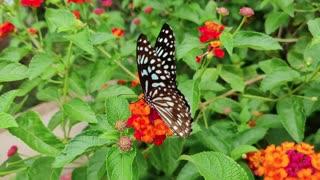so beautiful butterfly on flower