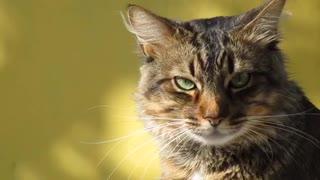 Evil cat looks