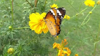 so beautiful butterflay on flower