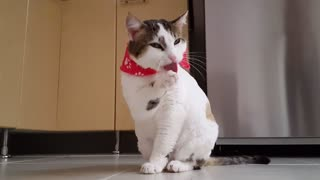Funny Cats!!!