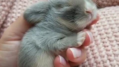 Adorable tiny animal sleeping