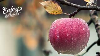 Love apple .
