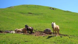 Lovely horses 01