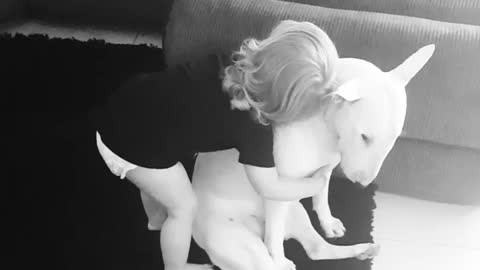Lola the Bull Terrier loves cuddles