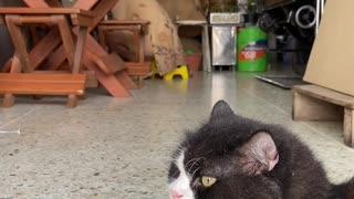 Watch a home keeper cat