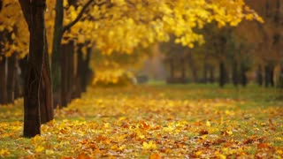 The leaves fall in the autumn season