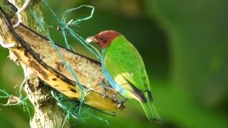 Plumage bird
