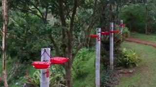 """La pandemia dificulta alimentación de las aves en el """"paraíso de los colibríes"""" de Colombia"""