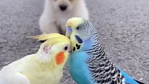 Dog Making Love To Parrots Love Feeling Love