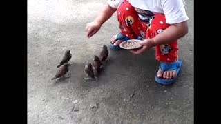 Child Feeds Abandoned Baby Birds