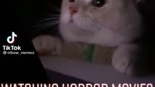 Cat watching horror movie in the night😲