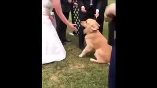Cute Dogs and Cats Compilation HD