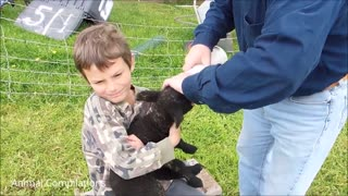 Heart Melting Baby Lamb Completion