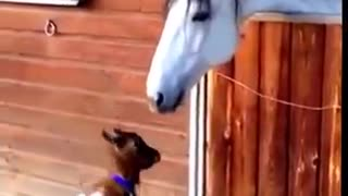 Funny Animal Wearing Clothes