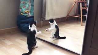 Funny cat video - cat playing with mirror