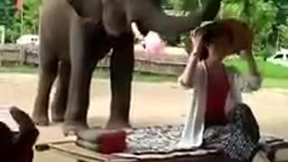 Amazing Natural Elephant Spa.