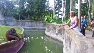A girl tease an orangutan