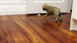 Dogy Playing with Mouse
