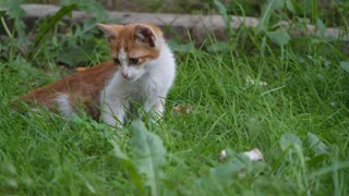 Cats and grass