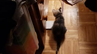 Crazy kitties playing