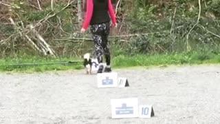 Training Puppies