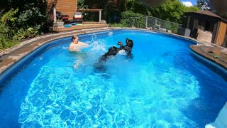 Pool time with rottweilers
