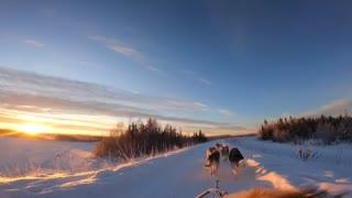 Tourists enjoy husky dog sledding with beautiful sunset in Alaska